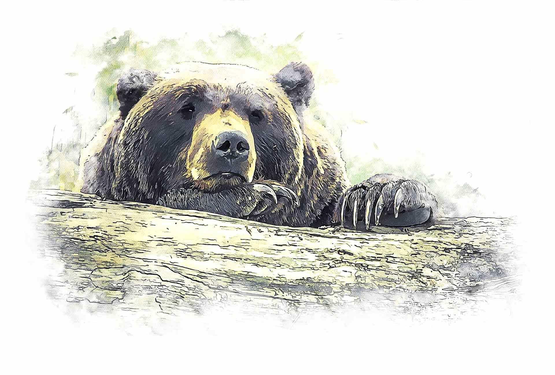 Begegnung mit einem Bär