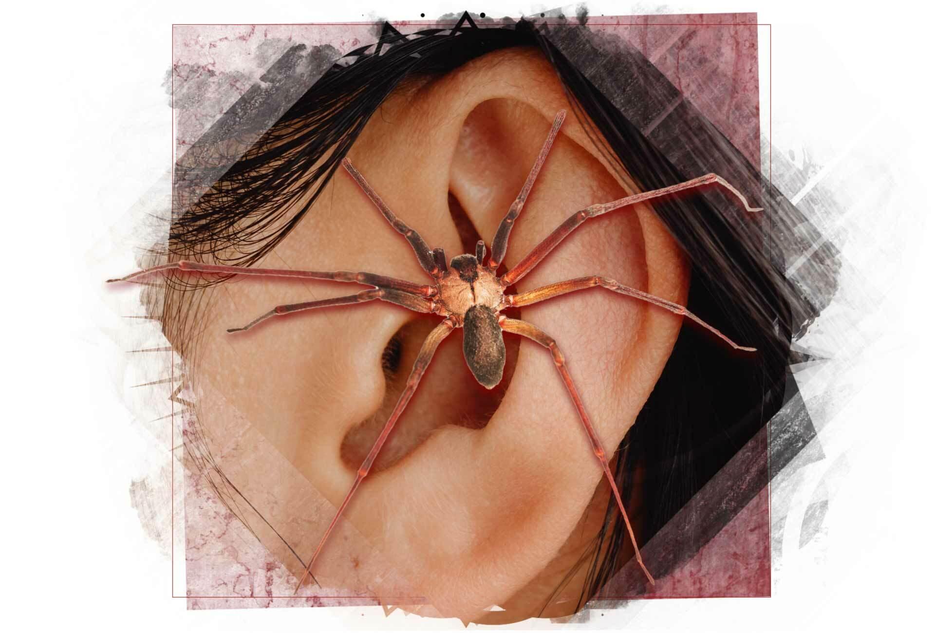 Spinne im Ohr